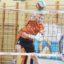 Znakomity turniej młodzików w Lubinie