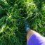 Jest ciepło i pada, więc rośnie trawa