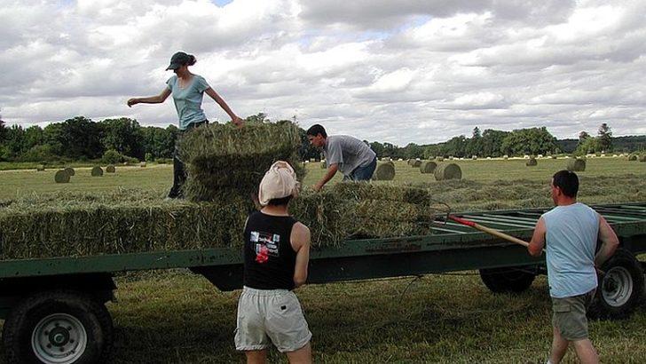 Nawet 900 tys. na modernizację gospodarstw rolnych