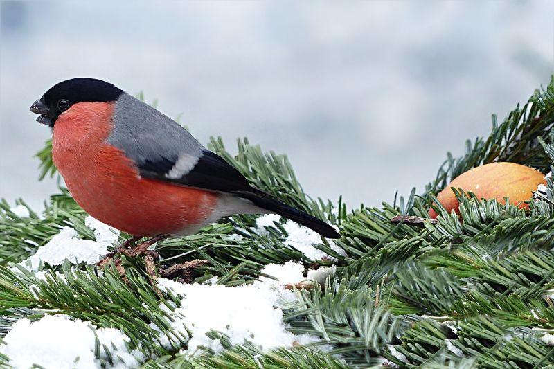 Lubin policzy ptaki