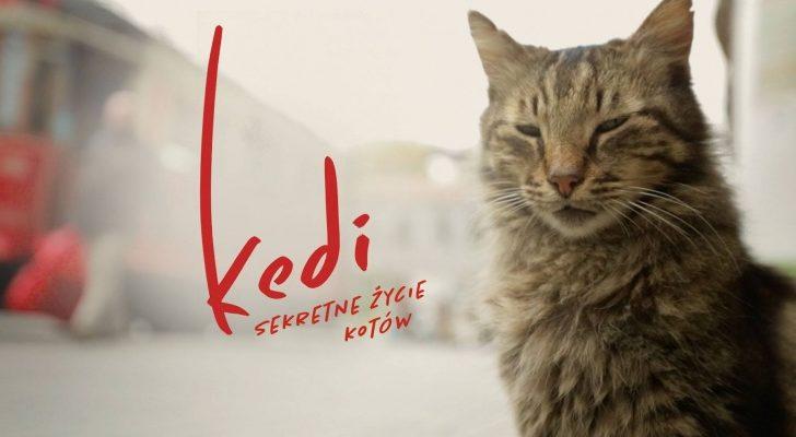 Sekretne życie kotów
