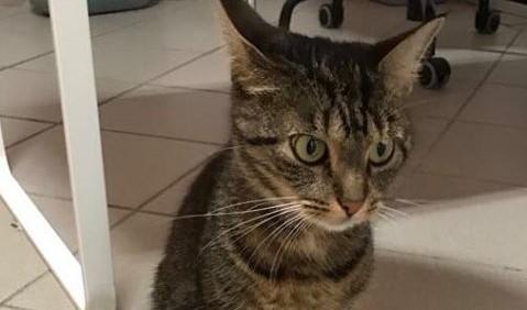 Znaleziono kotkę. Czy ktoś jej szuka?