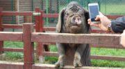 Lubińskie zoo od teraz samodzielne