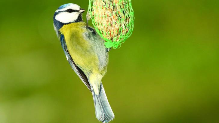 Jak dokarmiać ptaki by ich nie skrzywdzić?
