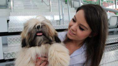 Psie piękności zjadą do Lubina