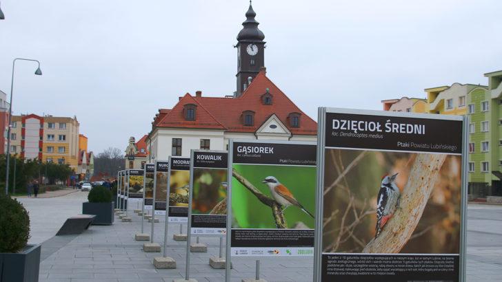 Ptaki z parku przeniosły się na rynek